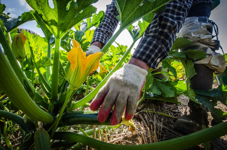 L 39 entretien des jardins les paysagistes fran ais for Entretien jardin geneve